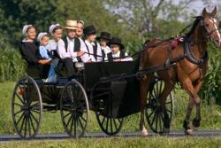 Amish Division